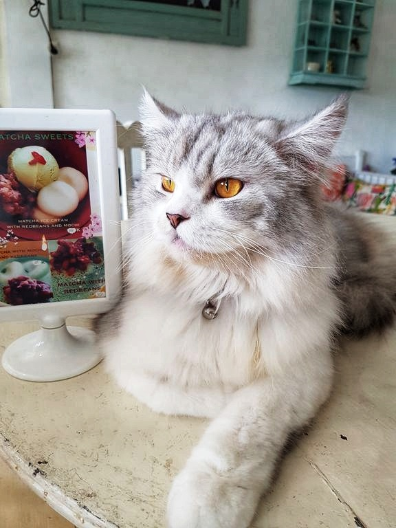Things To Do In Ubud - Cat cafe