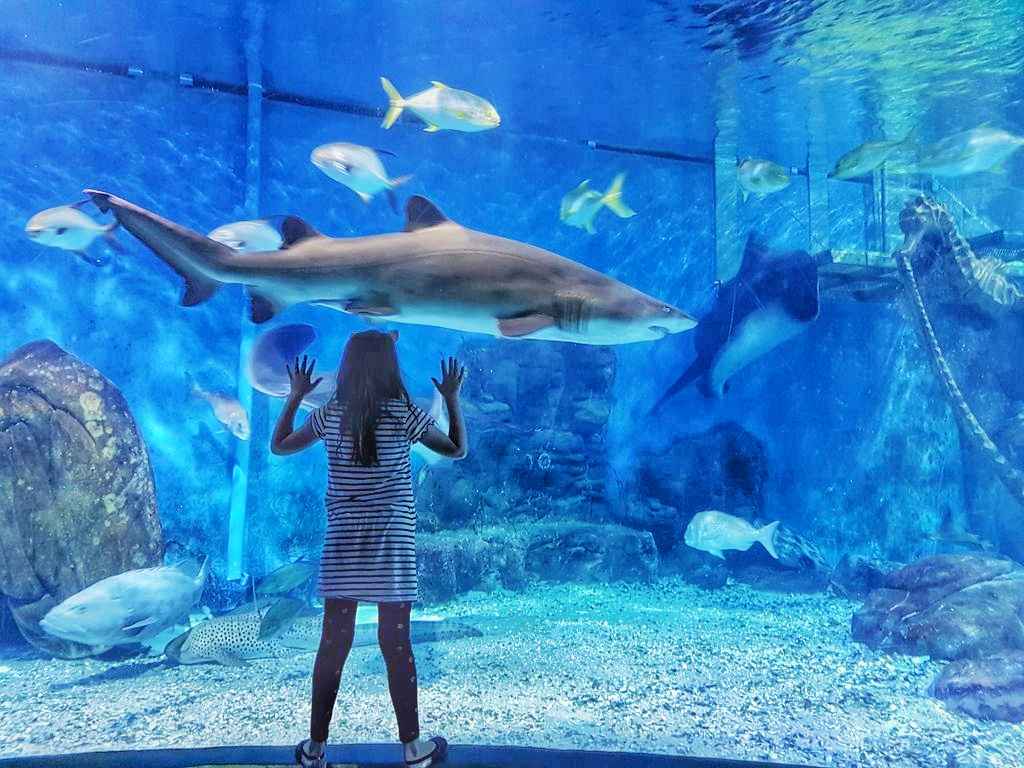 Things To Do With Kids In Melbourne - Sealife