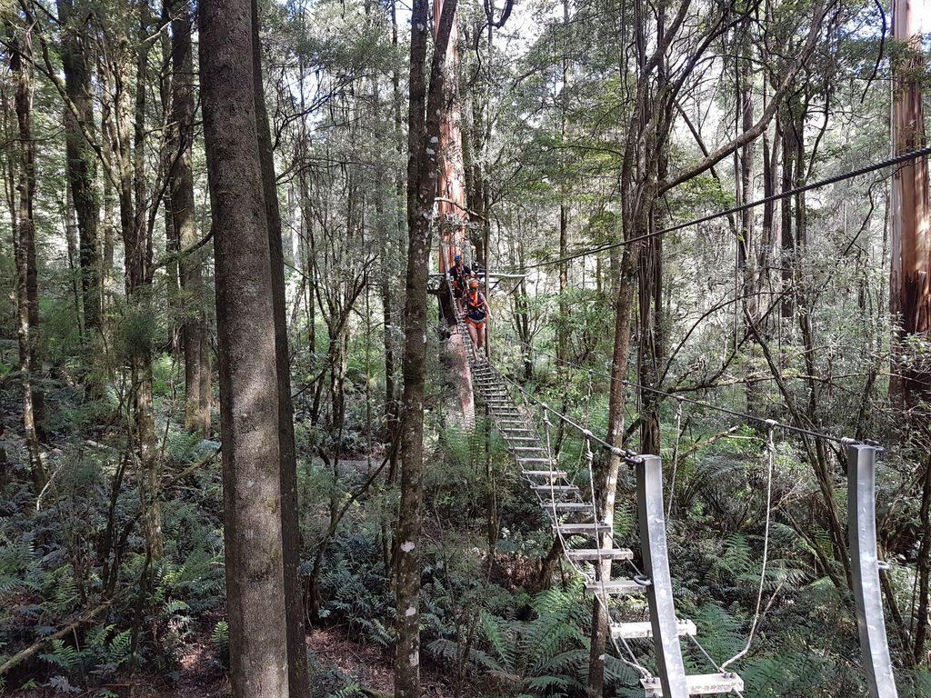 Otway Fly Treetop Adventures - Bridge