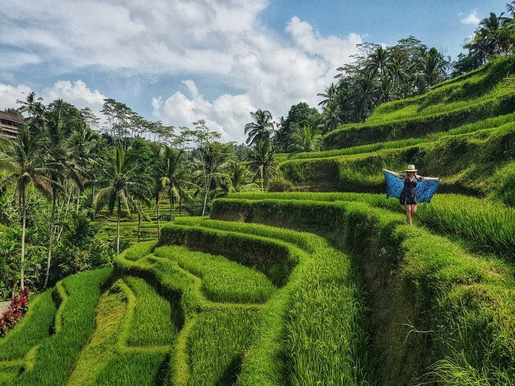 Things To Do In Ubud - Rice terrace