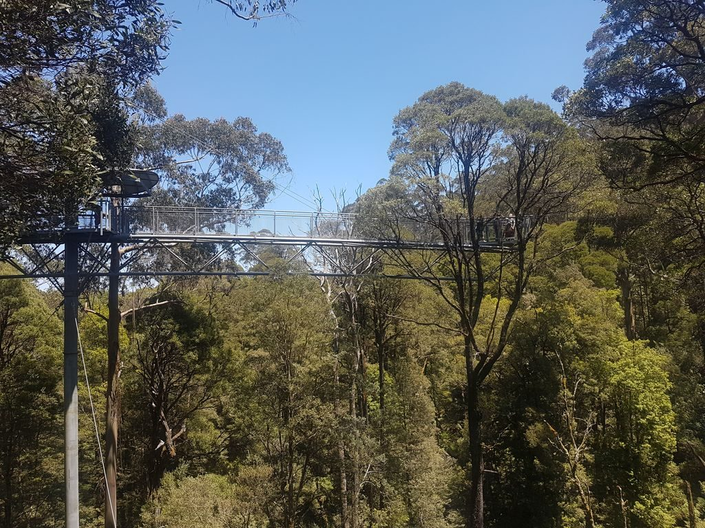 Top 15 Places On The Great Ocean Road - Otway Treetop