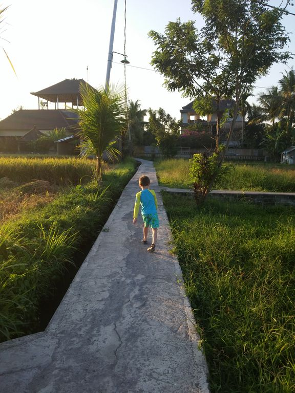 Bali With Kids: Rice paddy walk