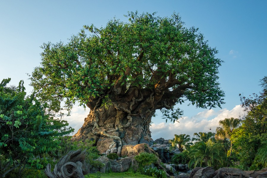 Disney VIP Tours  - Tree of life