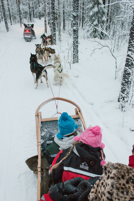 Lapland, Finland: The Ultimate Family Christmas Destination - husky ride