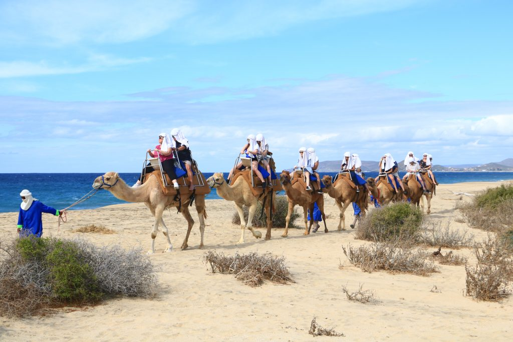 3 best beach adventures in Cabo - Camel ride