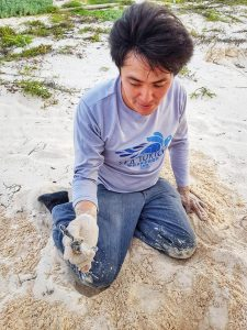 Releasing Sea Turtles - Volunteer