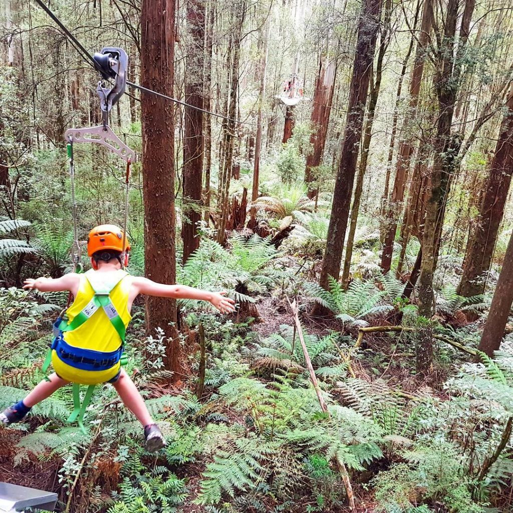 Things To Do With Kids In Melbourne - Otway Fly