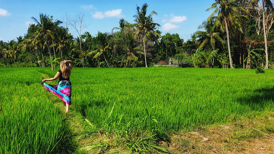 I'm a TV Star- ricefields