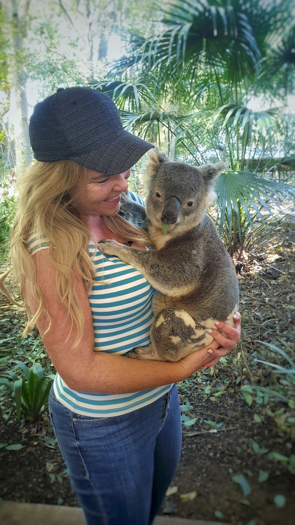 cute australian animals - koala