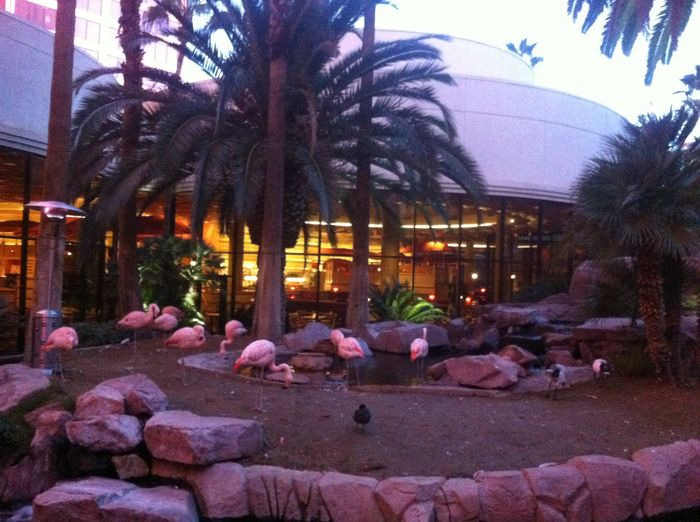 Las Vegas with kids - Flamingo
